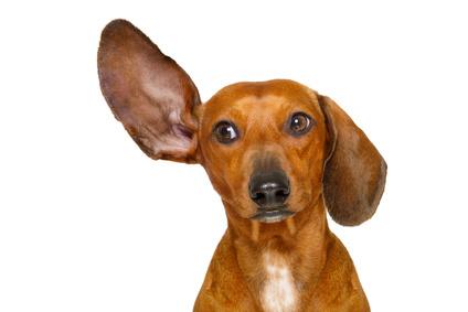 Nassfutter für den Hund